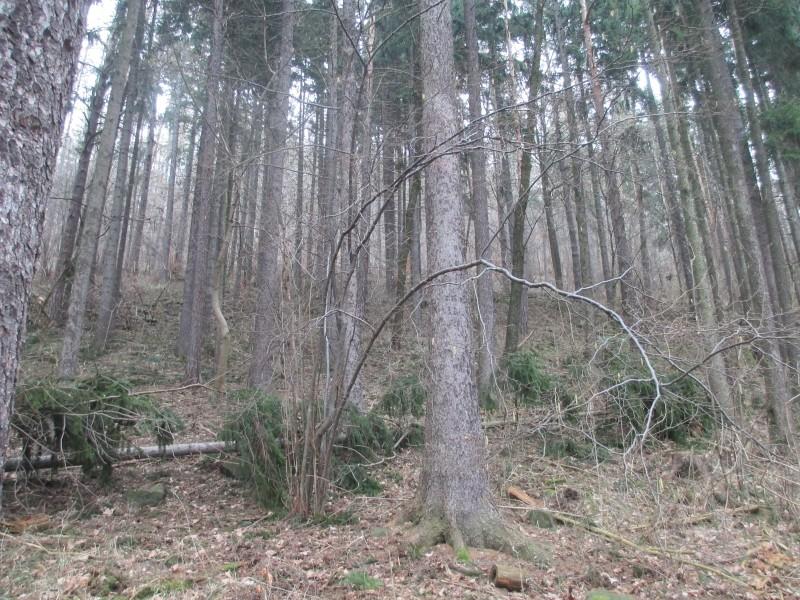 15-02-14_waidmann_hike_05