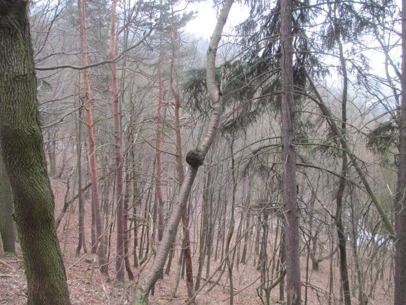 15-02-14_waidmann_hike_27