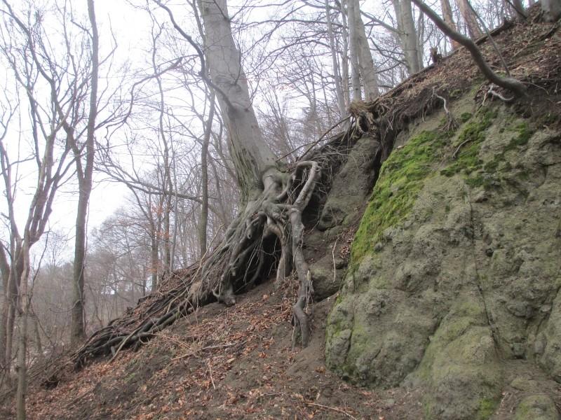 15-02-14_waidmann_hike_39