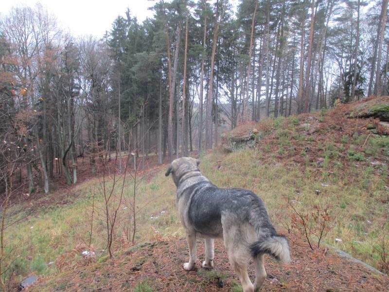 2015-winter-hike_19