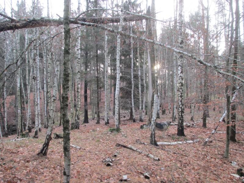 2015-winter-hike_36