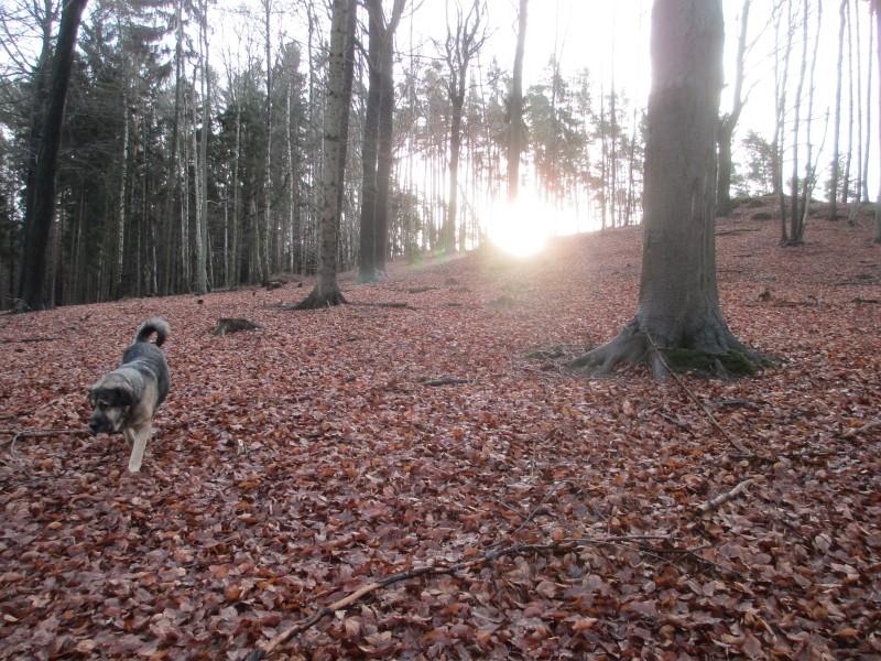 2015-winter-hike_37