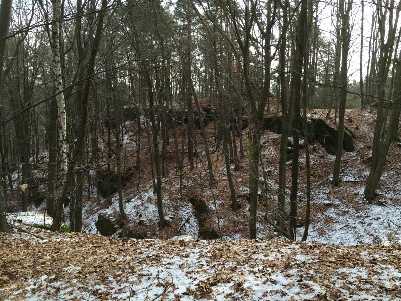 fatwood_hike_01
