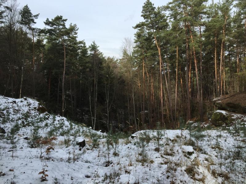 fatwood_hike_02