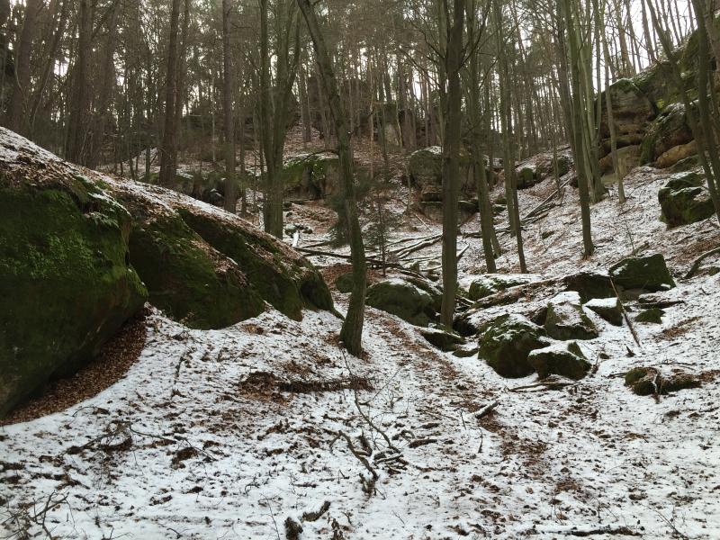 fatwood_hike_07