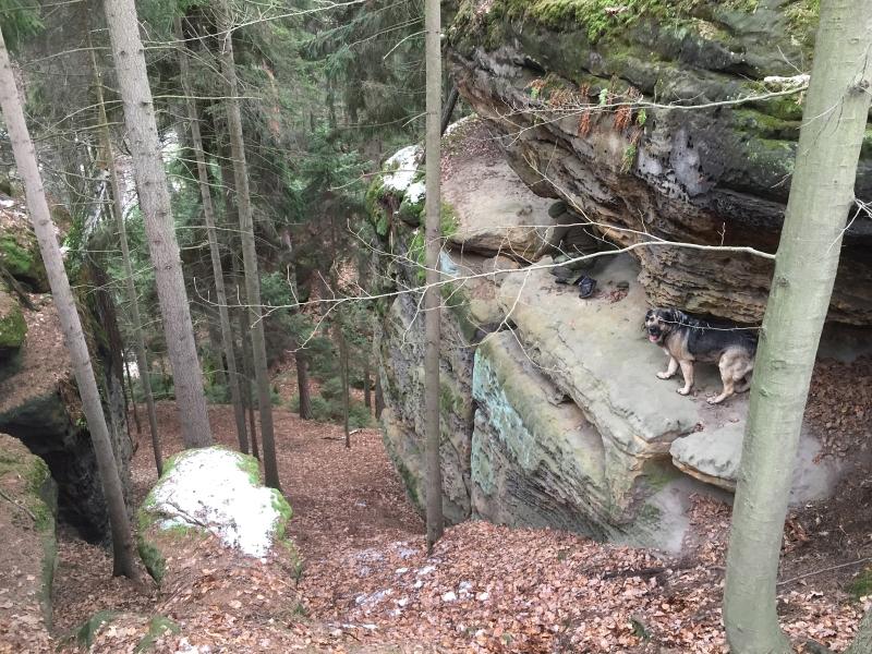 fatwood_hike_13