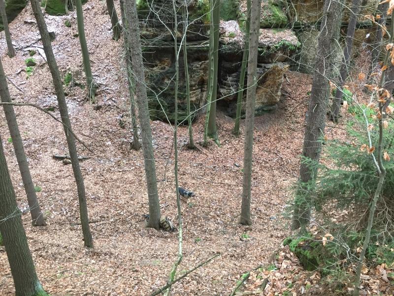fatwood_hike_16