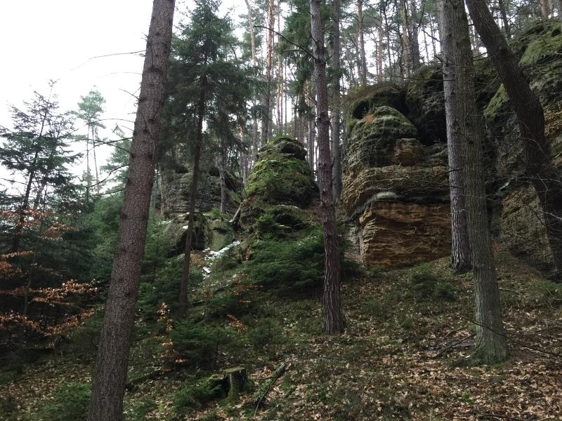 fatwood_hike_28