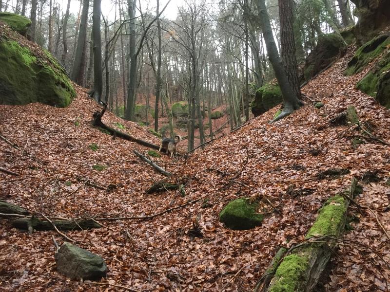 fatwood_hike_32