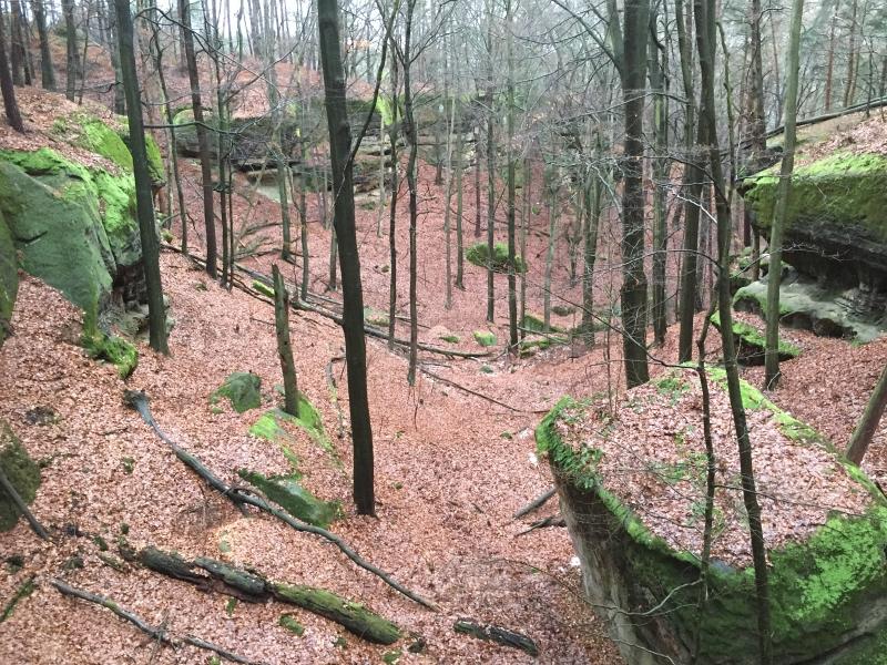 fatwood_hike_34