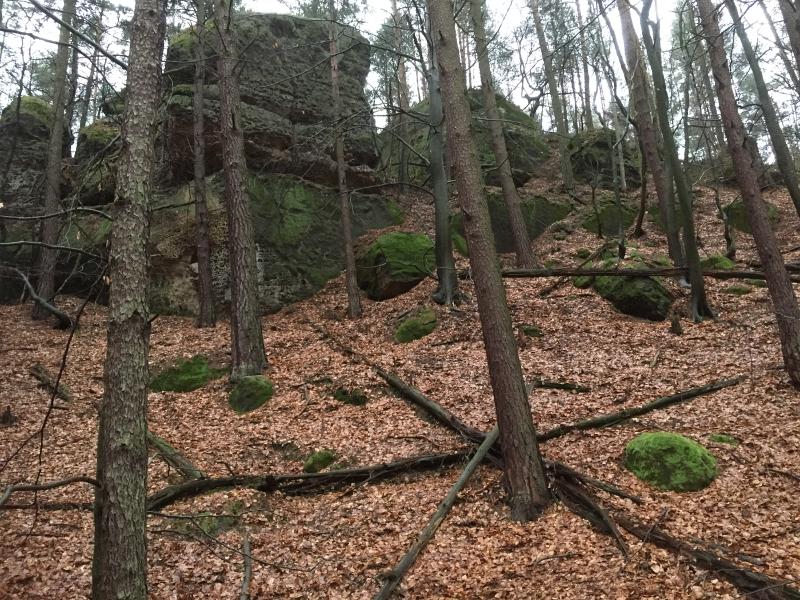 fatwood_hike_35
