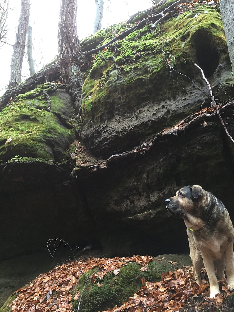 fatwood_hike_48