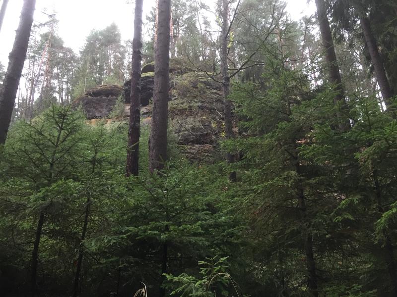 fatwood_hike_49