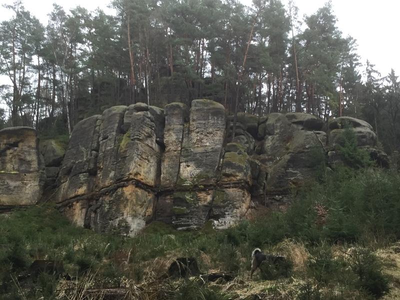 fatwood_hike_50