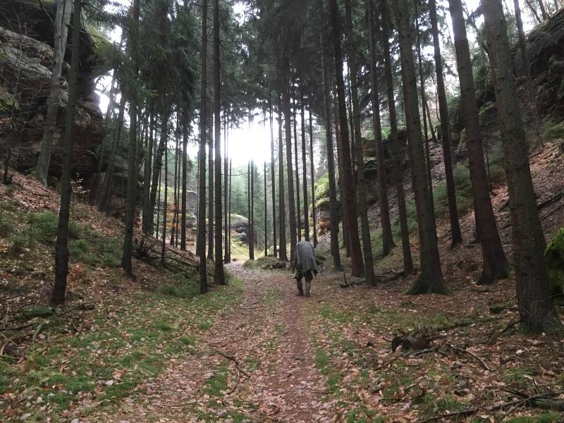 fatwood_hike_51
